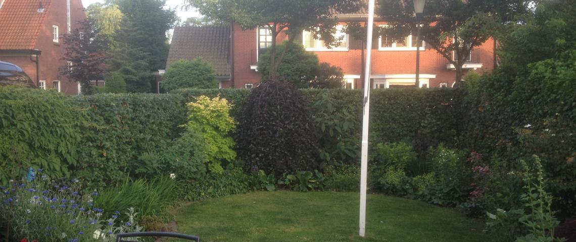 South-side garden