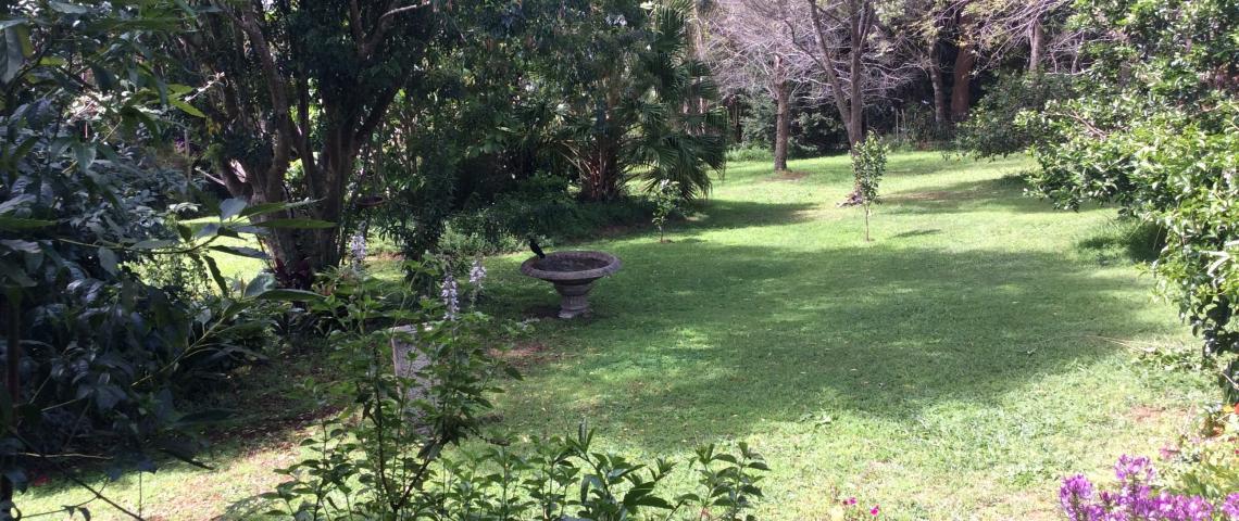 Our garden from back verandah